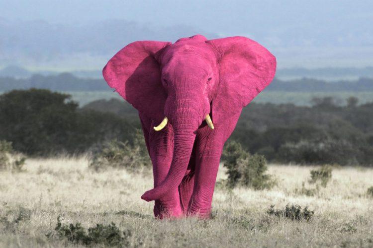 Pink Elephant overgenomen door Broad Horizon